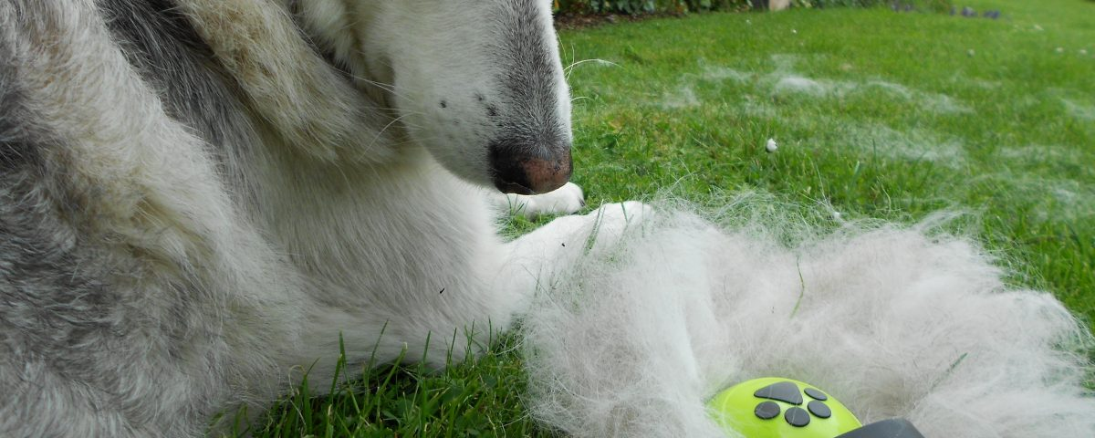 Husky-Wolle