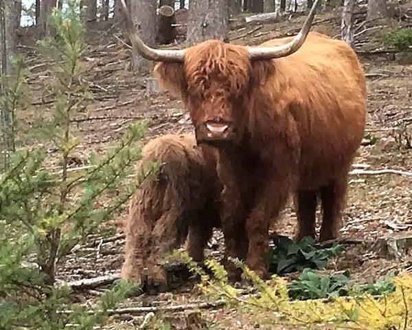Zwischen Hochlandrindern und Wildpferden im Wildtiergehege Oerlinghausen